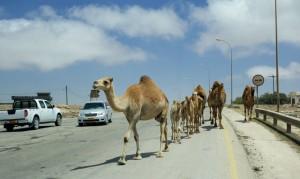 Traffic jam, Omani-style