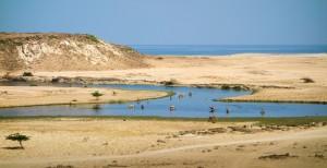Camels having a dip at Khor Rori